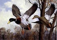 "Copy of Painting ""Ducks"""